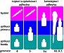 Adhezní spoj a adhezivní systémy I. část